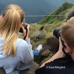 Lunnefåglar i fokus (Ewa Rilegård)